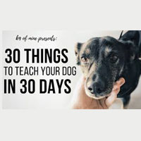 Digital Dog Training Course Coupon Codes and Deals