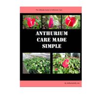 Anthurium Care Coupon Codes and Deals